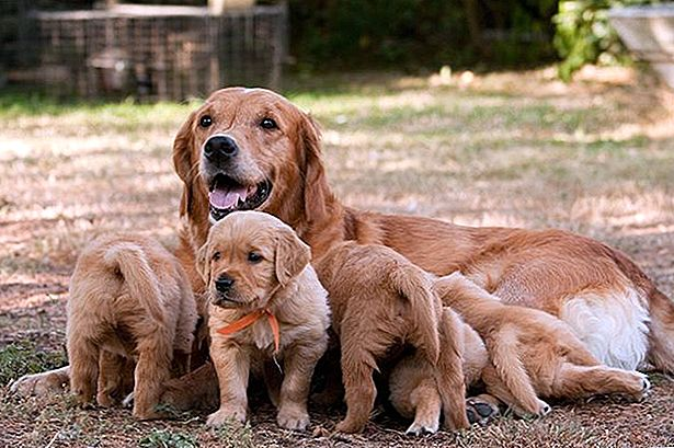 Canine Maternal Instincts