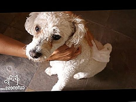 Video: Homemade Dog Bath Wipes