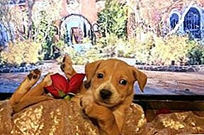 """Bachelor"" Puppies Ask If You're The One? [Video]"
