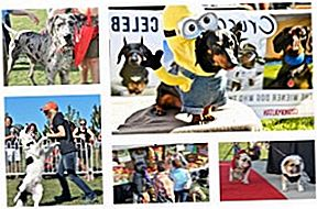 Get Your Woof On At Woofstock 2016