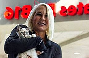 Kitten Cuddle At Charlotte Airport Is een snorrende Pre-flight Treat