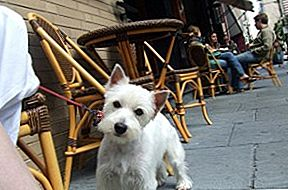 N.Y. OKs Dogs In Outdoor Dining Areas