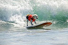 Snoot to Snoot: Q & A met Surf Therapy Dog Haole