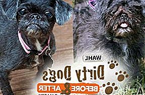 Stem op je favoriete make-over in Wahl's Dirty Dog Before & After Contest