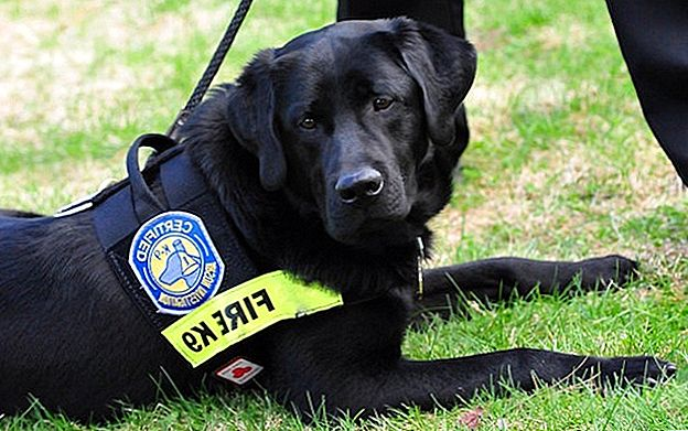 Seeing Eye Dropout Dog Find New Career As Arson Detective
