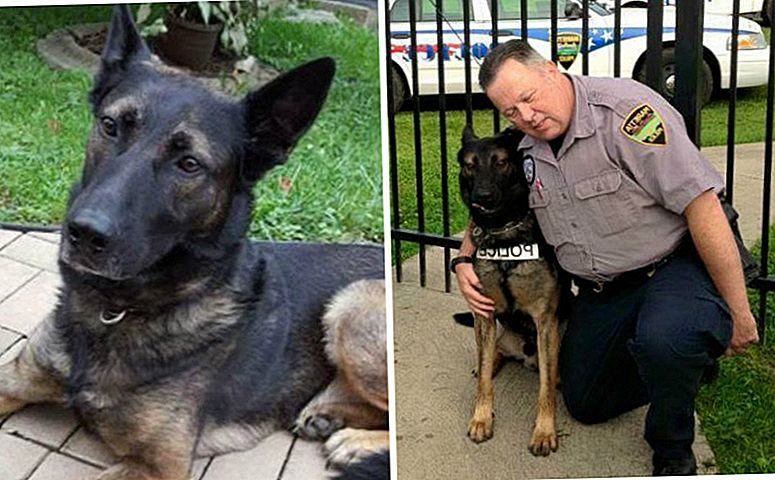 UPDATE: Canine Officer Ajax en Retired Officer Hickey hebben net het beste nieuws
