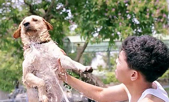 11 Pups die pawsitively Ruv Bath Time