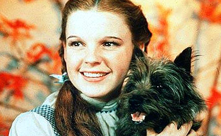 The True Hollywood Story Behind Terry, The Talented Dog Actress Who speelde Toto