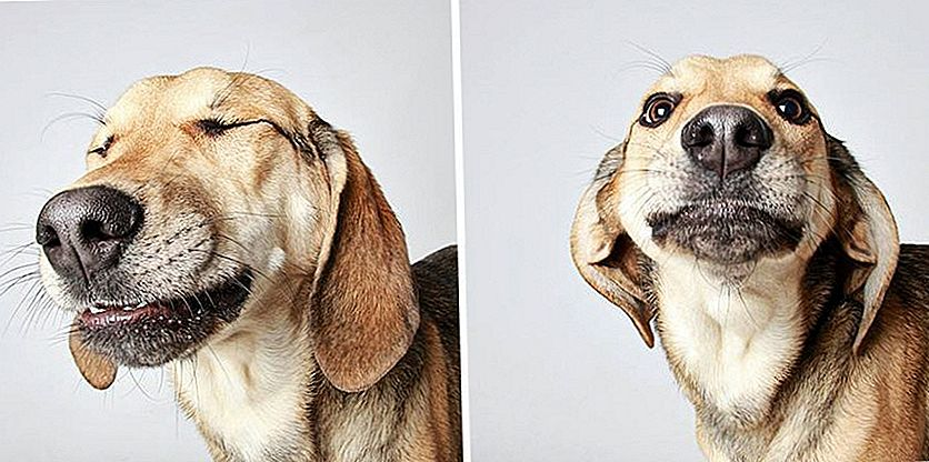 14 Photo Booth Gifs van Shelter Dogs die ze in al hun Goofy Glory laten zien