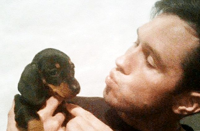 In Memory Of Ray, The Little Brown Vicktory Dog