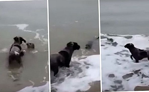 Seal and Dog Deel een Squee-Worthy Moment On The Shore