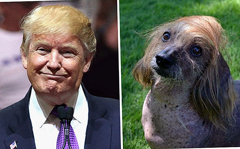 "UPDATE: ""World's Ugliest Dog"" Contender's Coiffed 'Do is nog beter dan die van Trump"