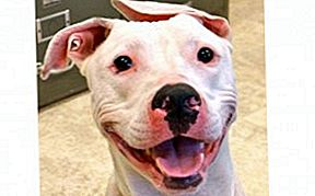 Adoptable Dog of the Week - Ryan