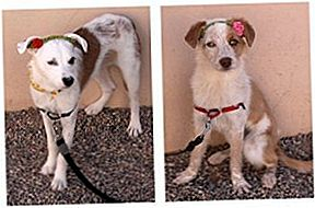 Adoptable Dog Of The Week - Zoe en Scout